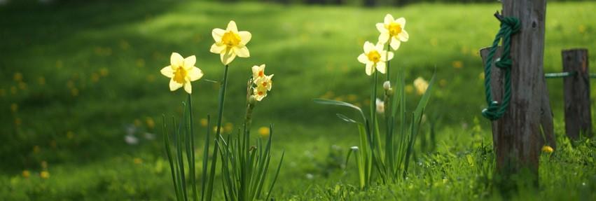 Hillmans Florist Hereford - Order Online or Call 01432 276098